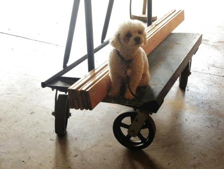 At the Forklift, even our four-legged friends are into reuse.