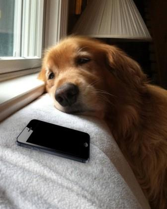 dog-waiting-by phone