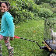 Free-range Forklifter: A Community Forklift Team Member's avian adventure